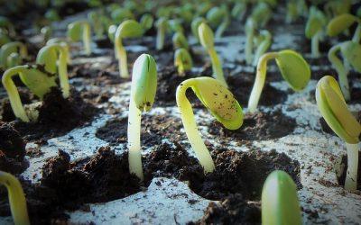 Monsanto's $7.7bn triumph over Brazilian farmers